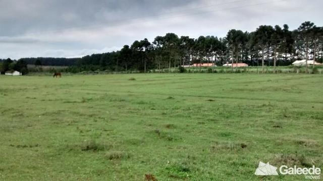 Chacara|Área com 60.000m² em São José dos Pinhais - Foto 8