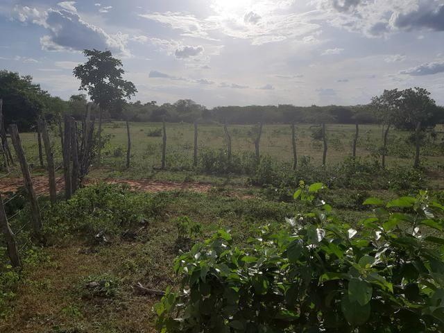 Vendo fazenda em crateus ce ou troco - Foto 8
