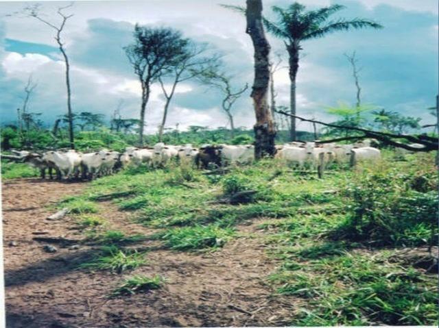 Fazenda região de Juara F0022 - Foto 9