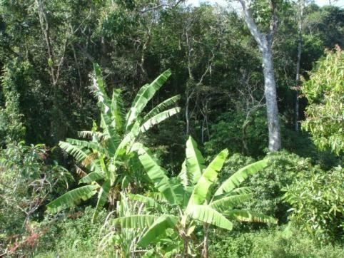 Terreno, Pântano do Sul, Florianópolis-SC