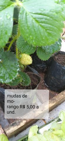 Mudas de hortaliças, e suculentas plantas em geral - Foto 2
