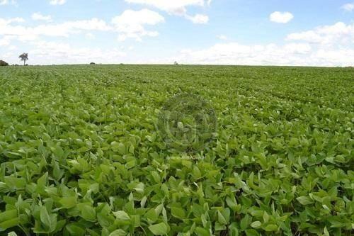 Fazenda 2500 ha em sapezal para agricultura
