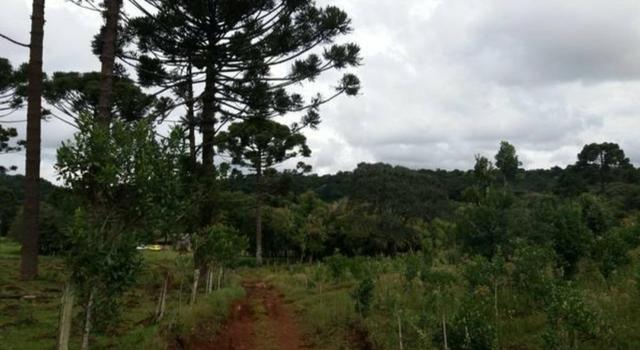 Vendo um alqueire de terra em Cantagalo