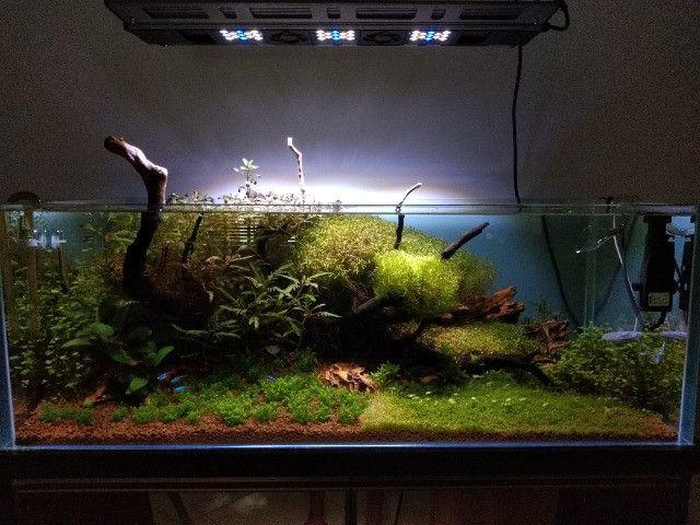Aquário Plantado