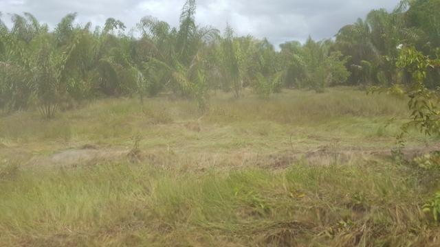 Fazenda de 1700 hectares Amajari. ler descrição do anuncio - Foto 5