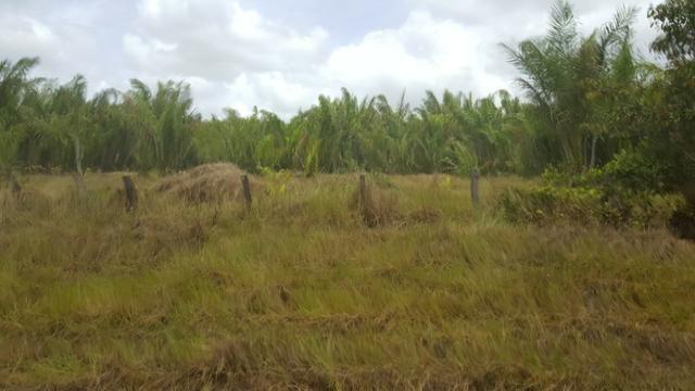 Fazenda de 1700 hectares Amajari. ler descrição do anuncio