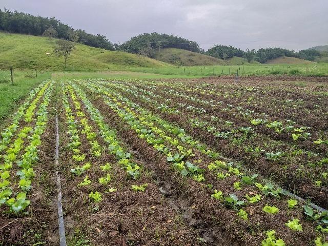 Hortaliças orgânicas - Foto 3