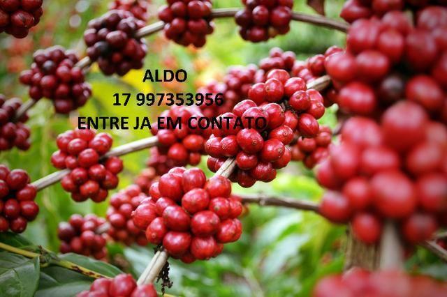 NPK Líquido - Adubo de café - Foto 4