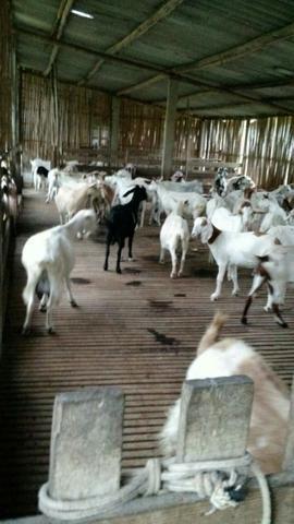Fazenda em Paraibuna - Foto 5