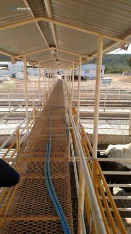 Fazenda no Estado da Bahia - Foto 10