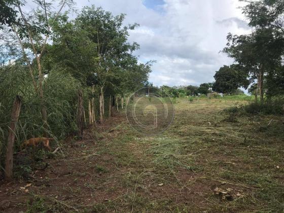 Sítio 11,8 ha na região distrito da guia - Foto 12