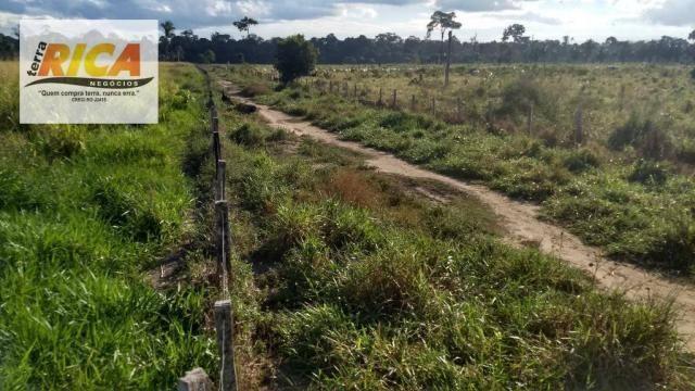 Fazenda com 140 Hectares em Candeias do Jamari/RO à venda, a 14 km da cidade - Foto 15