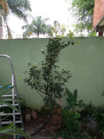 Mudas de Plantas e Hortaliças - Foto 4