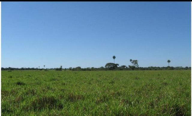 Fazenda Excelente Fazenda no Município de Poconé 16520412 hectares - Foto 7