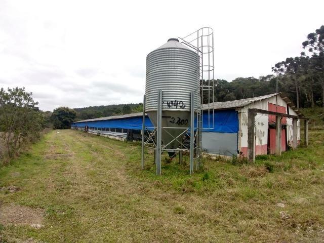 Fazenda em Campo Largo Bairro São Silvestre - Foto 18