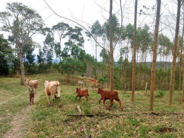 Fazenda em Campo Largo Bairro São Silvestre