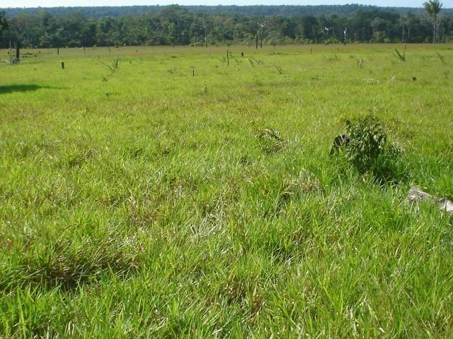 Fazenda em Parecis - RO. 4.000 hectares - Foto 16