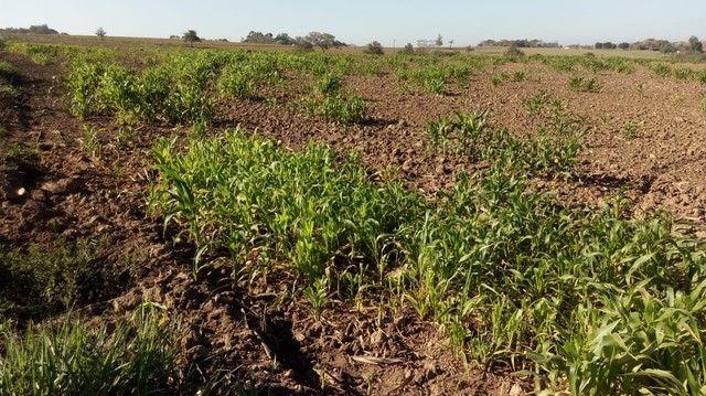 Fazenda, Sítio, Chácara, para Venda em Porangaba com 72.600m² 3 Alqueres, Plano, Limpo, 10 - Foto 8