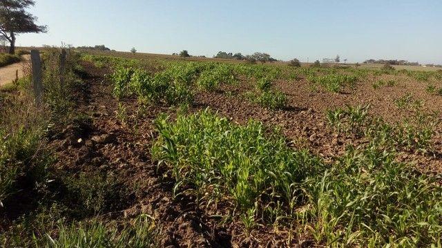 Fazenda, Sítio, Chácara, para Venda em Porangaba com 72.600m² 3 Alqueres, Plano, Limpo, 10 - Foto 3