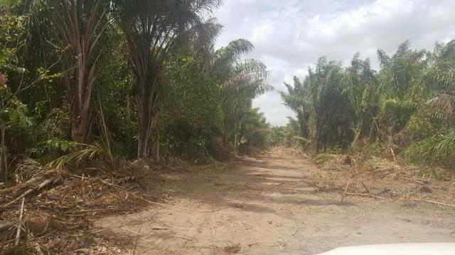Fazenda de 1700 hectares Amajari. ler descrição do anuncio - Foto 4