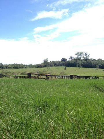 Fazenda de 606 hectares, S. Joao da Baliza De porteira fechada. ler descrição do anuncio - Foto 15