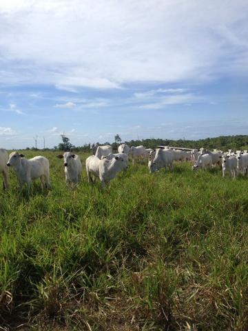 Fazenda de 606 hectares, S. Joao da Baliza De porteira fechada. ler descrição do anuncio - Foto 7