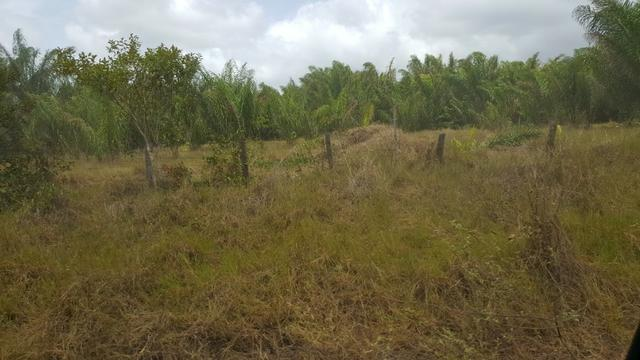 Fazenda de 1700 hectares Amajari. ler descrição do anuncio - Foto 2