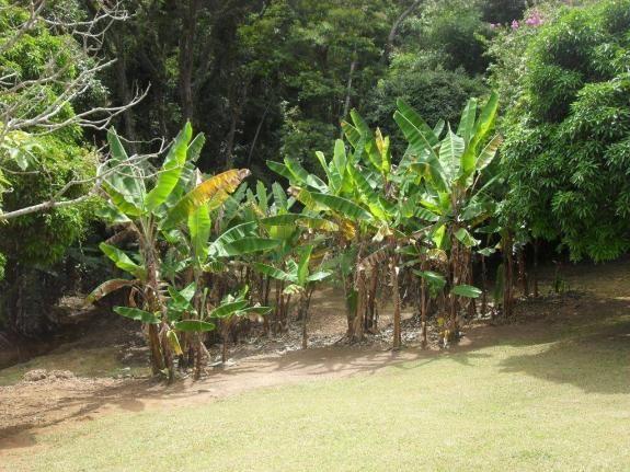 Sítio rural à venda, Campo Limpo, Teresópolis. - Foto 16