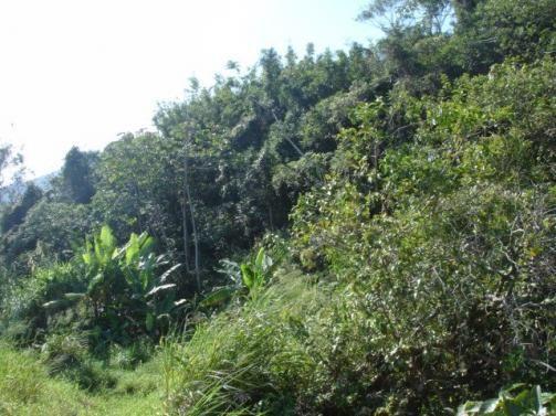 Terreno, Pântano do Sul, Florianópolis-SC - Foto 3