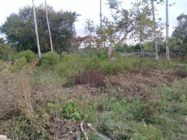 Excelente área de terra no povoado de boa hora, próximo ao parque viver tomba - Foto 15