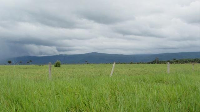 Fazenda 15000 hectares em vila bela, ha 60 km ponte e Lacerda - Foto 8