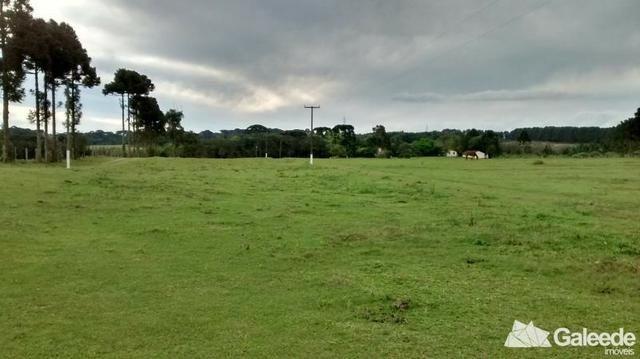 Chacara|Área com 60.000m² em São José dos Pinhais - Foto 4