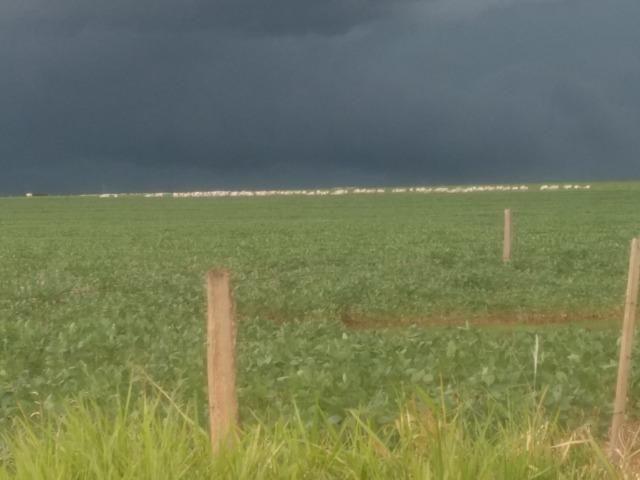 Alugo Fazenda p Arrendamento no Ms 1000 há - Foto 4