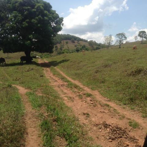 Fazenda caruru Valor R$ 1,400,000 - Foto 13
