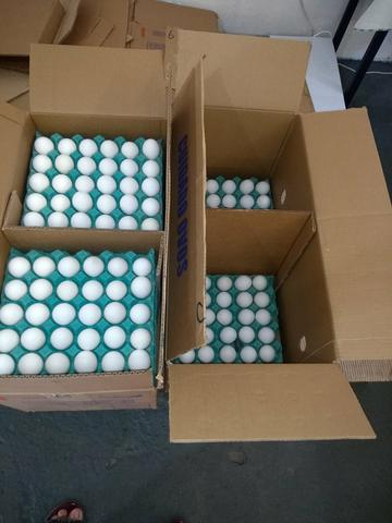 Distribuidora de ovos - Foto 4