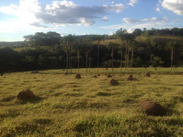 Fazenda caruru Valor R$ 1,400,000 - Foto 10