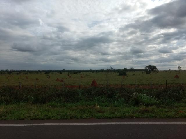 Alugo Fazenda p Arrendamento no Ms 1000 há - Foto 12