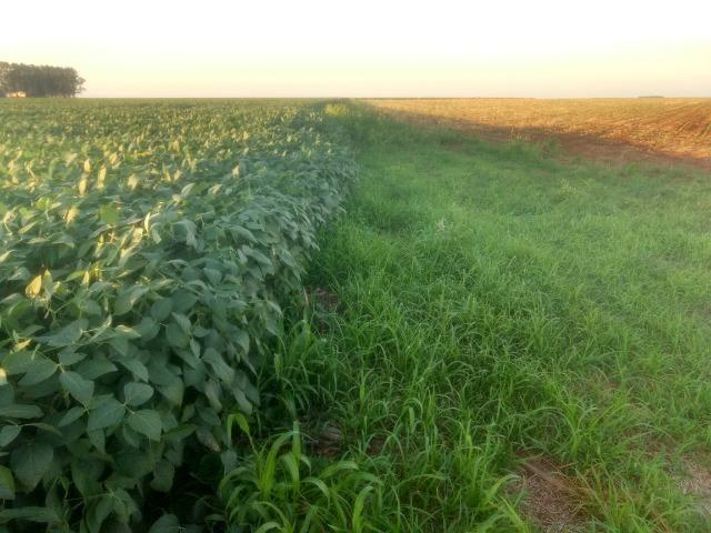 Alugo Fazenda p Arrendamento no Ms 1000 há - Foto 15