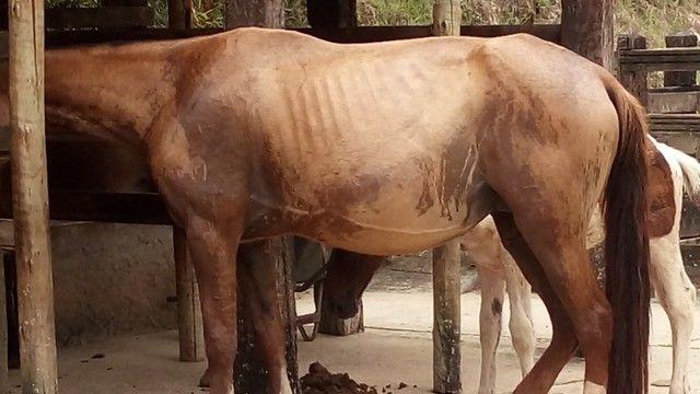 egua campolina - Foto 2