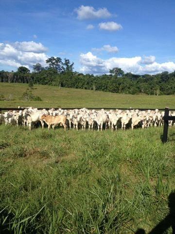 Fazenda de 606 hectares, S. Joao da Baliza De porteira fechada. ler descrição do anuncio - Foto 5