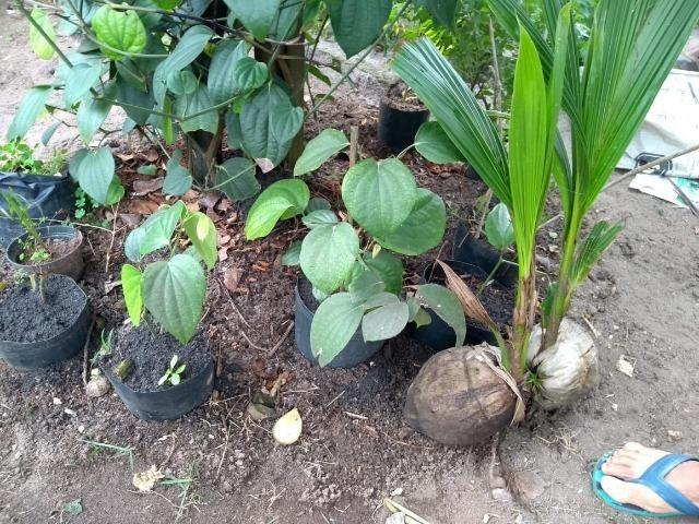 Mudas de Plantas e Hortaliças - Foto 2