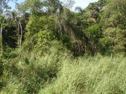 Terreno, Pântano do Sul, Florianópolis-SC - Foto 2