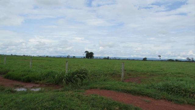 Fazenda 15000 hectares em vila bela, ha 60 km ponte e Lacerda - Foto 5