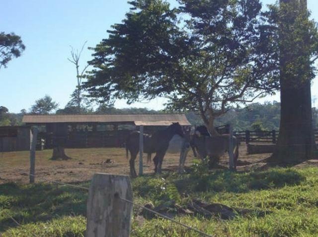 Fazenda região de Juara F0022 - Foto 4