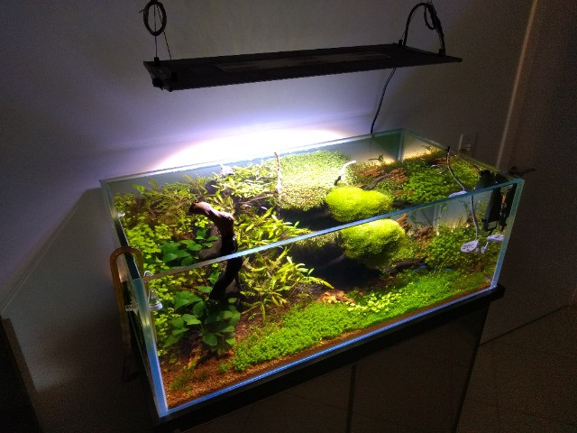 Aquário Plantado - Foto 2