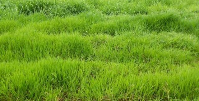 Área de terra com 20 hectares com 80 de pasto - Foto 2