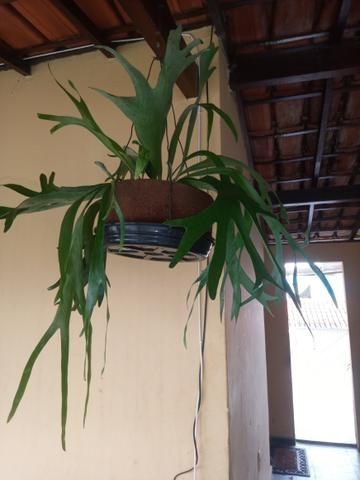 Plantas a partir de 50 reais ate mil reais a unidade - Foto 3