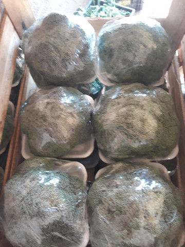 Vendo bandejas de brócolis e tomates - Foto 3