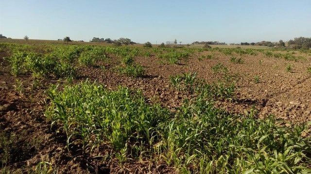 Fazenda, Sítio, Chácara, para Venda em Porangaba com 72.600m² 3 Alqueres, Plano, Limpo, 10 - Foto 6