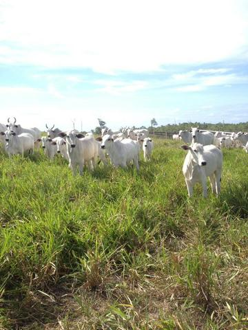 Fazenda de 606 hectares, S. Joao da Baliza De porteira fechada. ler descrição do anuncio - Foto 6